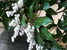 アナウンサーでセラピスト yukie の smily days                   ~周南市アロマのお店 Aroma drops~ -2011033013230000.jpg