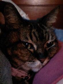 寝るネコは育つ-sizimi11033001