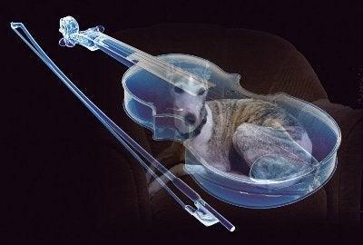 Dreaming Pippin-バイオリン