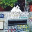 【画像】絶対にネコな…