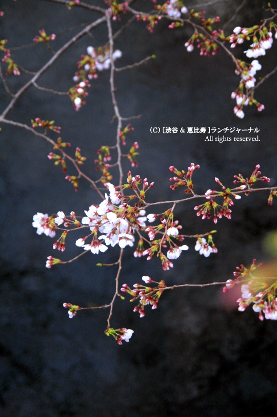 ●[渋谷&恵比寿] ランチ・ジャーナル-5