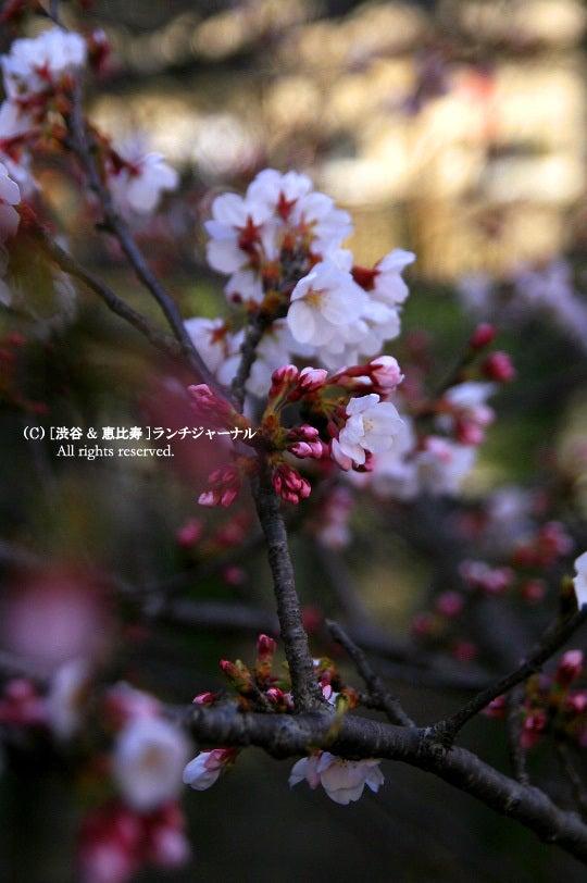 ●[渋谷&恵比寿] ランチ・ジャーナル-10