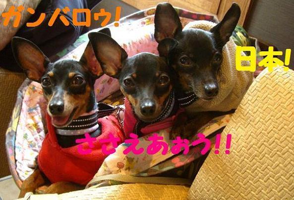 $なかよし☆RCS【RUSK☆&Chocolat★&Soleil♪】
