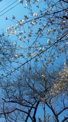 オカメインコのももちゃんと花教室と旅日記-110331_100943.jpg