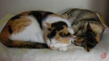 $ひょうすべブログ-猫の壁紙