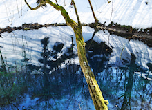 白神山地ツアーで能代山本地区の活性化すっぺ-2011年十二湖オープン6