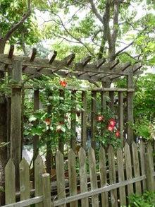$泉州:泉佐野の雑木林 (ガーデンコーギー:てんさん)