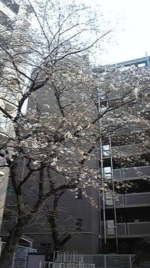 ★☆キラキラ星☆★                                                                   内面も外面もキラキラな女性になるゾ!!-DVC00215.jpg