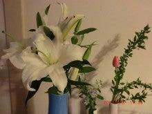 lilycherryのひとやすみブログ