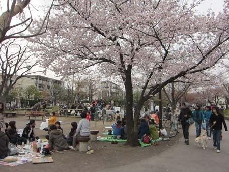 M・ブルテリアRexの成長日記(^^♪-お花見