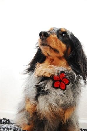 My Dear Dog Life