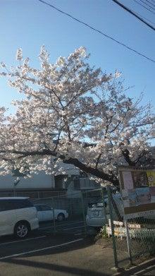 祇園の住人 お水編-110404_1633~01.jpg