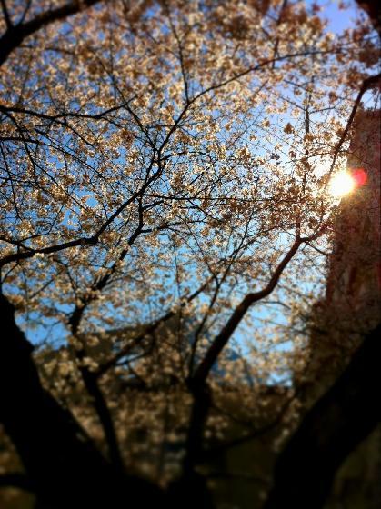 百色のブログ-sakura