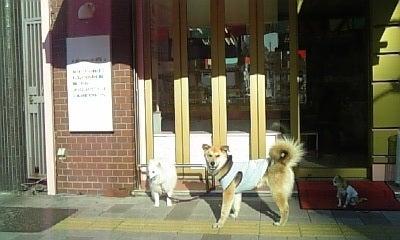 DDF通信(愛犬の手作りおやつ&お惣菜、ドッグカフェ、トリミングサロンのスタッフブログ)
