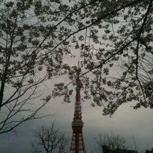 桜花と東京タワー。