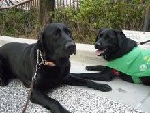 $盲導犬LAB&Love オフィシャルブログ