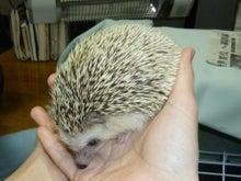 $世田谷のマンガ喫茶「ダンサン」-ハリネズミ
