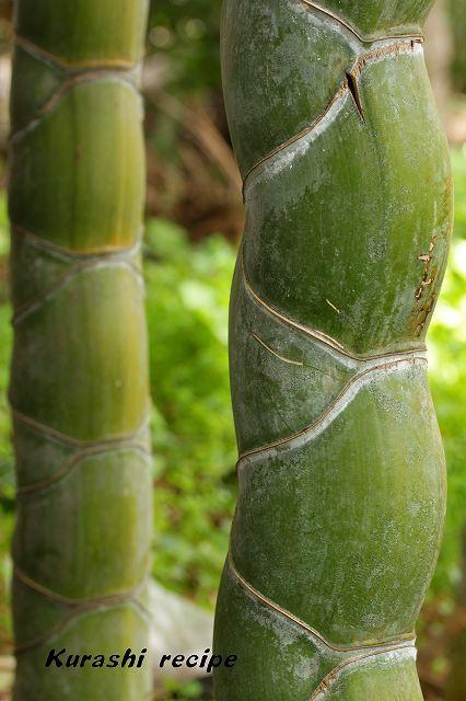 $旬菜料理家 伯母直美  野菜の収穫体験ができる料理教室 暮らしのRecipe-竹