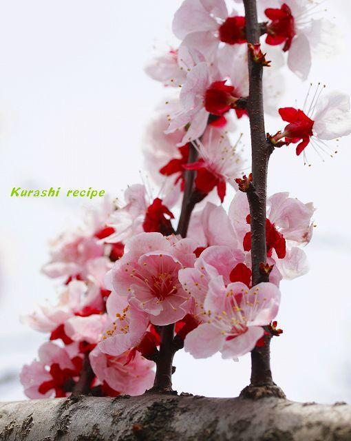 旬菜料理家 伯母直美  野菜の収穫体験ができる料理教室 暮らしのRecipe-杏の花