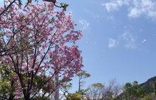 めざせ良質の睡眠 ~老舗ふとん屋が発信する快眠情報~-2011.04.07桜