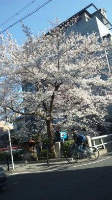 祇園の住人 お水編-110406_1546~01.jpg