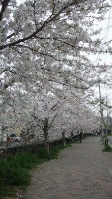 祇園の住人 お水編-110409_1620~01.jpg