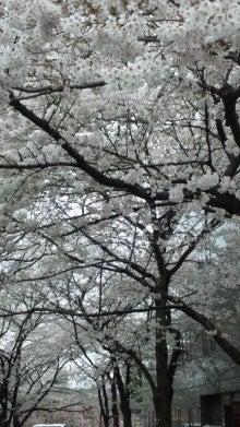 祇園の住人 お水編-110408_1453~01.jpg