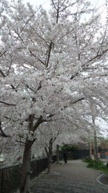 祇園の住人 お水編-110409_1621~01.jpg