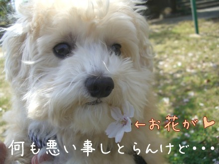 MIX犬☆ころ助と一緒♪