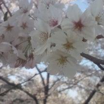 花を見ると気分アガる…