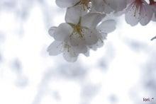 ☆*:.Snow Berry.:*☆