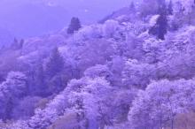 $写真家 谷角 靖オフィシャルブログ「オーロラの降る街 -谷角劇場-」Powered by Ameba オーロラの写真など -yosino