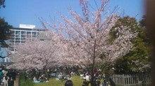 popoopo-お城の桜