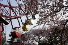 晴れたらいいね!!-観覧車と桜