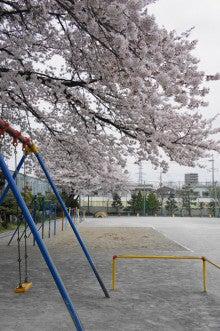 晴れたらいいね!!-校庭の桜