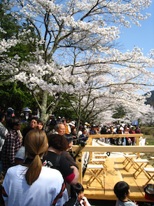 ぺらりんず吉賀町のブログ-桜