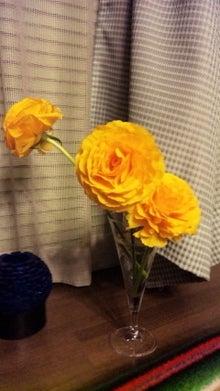 オカメインコのももちゃんと花教室と旅日記-110412_184827.jpg