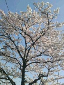 リエルのお楽しみ-桜