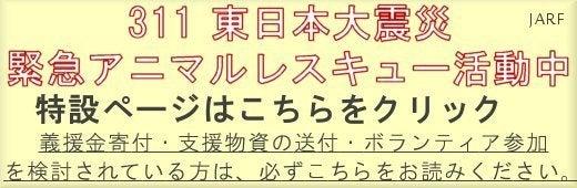 $長崎の保健所の命を救う会の代表のブログ 長崎県の動物愛護団体です 犬と猫の里親譲渡会を毎月開催