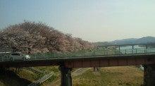 沙魚のお気楽日記-土手の桜2011 その3