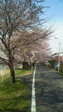沙魚のお気楽日記-土手の桜2011 その2