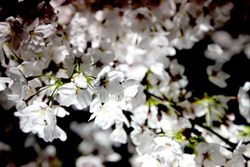 たま^^の写真ブログ