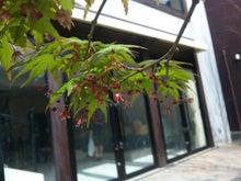 後藤英樹の三日坊主日記-紅葉の花1