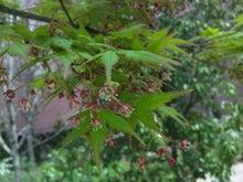 後藤英樹の三日坊主日記-紅葉の花3