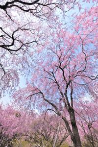 $写真家 谷角 靖オフィシャルブログ「オーロラの降る街 -谷角劇場-」Powered by Ameba オーロラの写真など -sakura