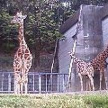 名古屋市東山動物園