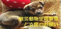$雨の降らない国-犬猫救済