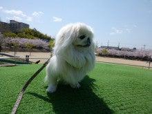 ★犬服作りにチャレンジ!