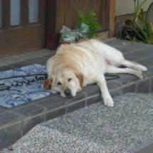 愛犬さくらのシャンプ…