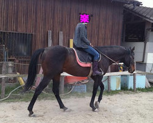 $シリウス-一人乗馬